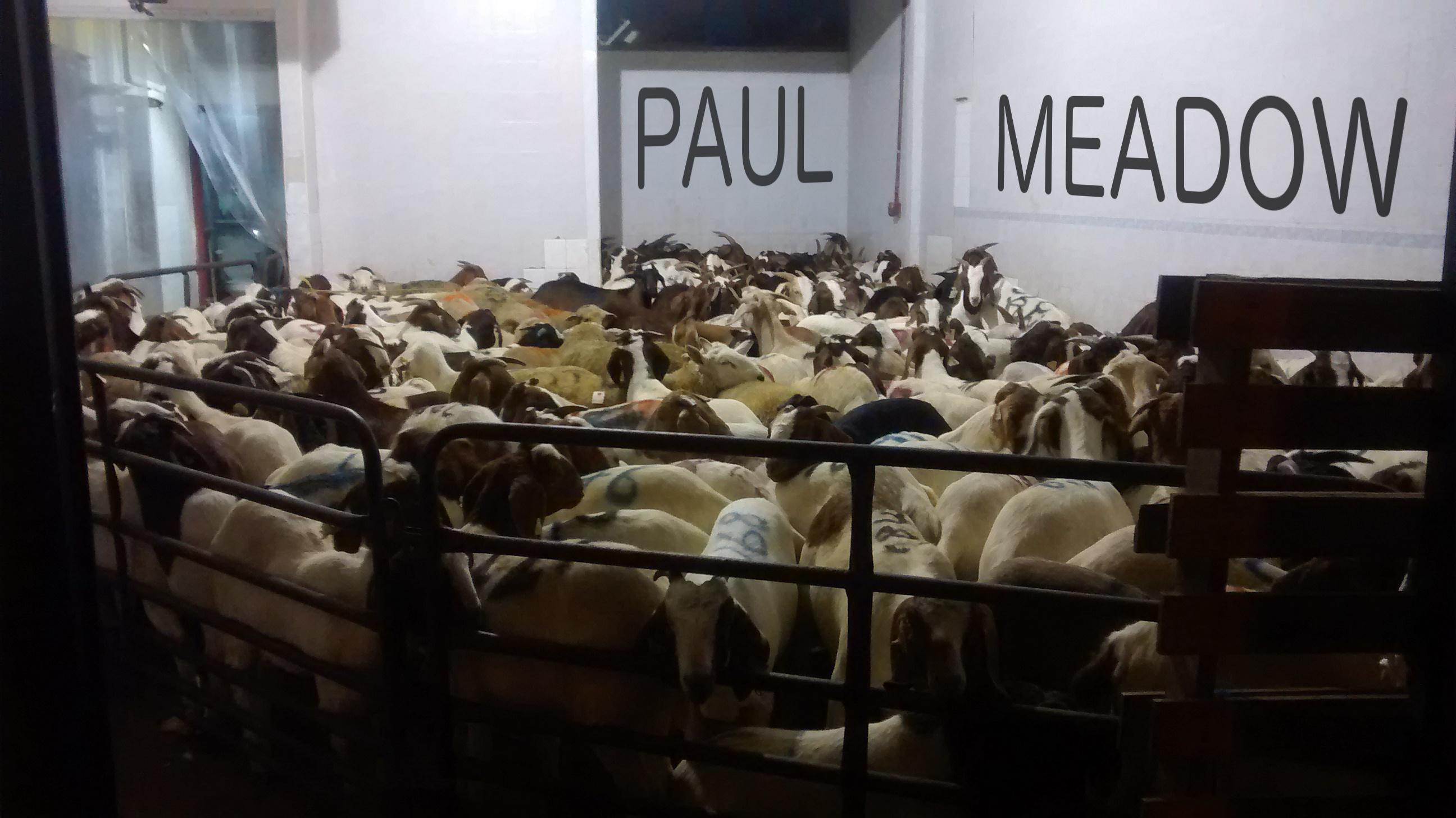 PM_goats2
